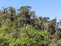 Krajobraz w parka narodowego Horton równinach, Sri Lanka Fotografia Royalty Free