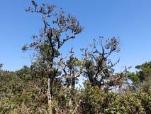 Krajobraz w parka narodowego Horton równinach, Sri Lanka Zdjęcia Royalty Free