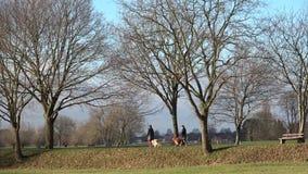 Krajobraz w parku Dwa ludzie spaceru z dużymi psami zbiory wideo