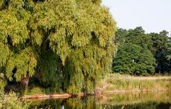 Krajobraz W parku jezioro Fotografia Royalty Free