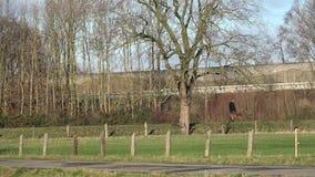 Krajobraz w parku Osoba chodzi z dużym psem zdjęcie wideo