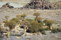 Krajobraz w Południowa Afryka Obrazy Royalty Free