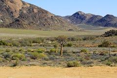 Krajobraz w Południowa Afryka Obraz Royalty Free