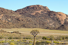 Krajobraz w Południowa Afryka Obrazy Stock