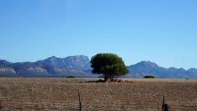 Krajobraz w Południowa Afryka Fotografia Stock