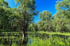 Krajobraz w powodzi Zdjęcie Stock
