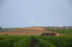 Krajobraz w Sicily, Menfi Ag Zdjęcia Royalty Free