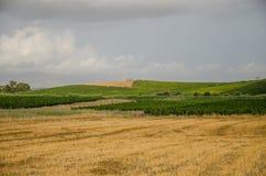 Krajobraz w Sicily, Menfi Ag Obrazy Stock