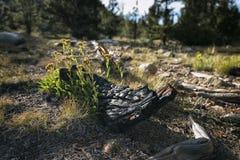 Krajobraz w sierra Nevada góry Fotografia Royalty Free