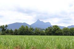Krajobraz w Wollumbin parku narodowym, Australia obrazy stock