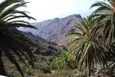 Krajobraz w wyspach kanaryjska Zdjęcia Stock