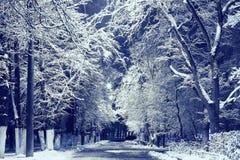 Krajobraz w zimy miasta parku Zdjęcia Stock