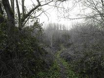 Krajobraz w Zottegem Zdjęcie Stock
