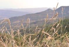 Krajobraz wheats Obrazy Royalty Free