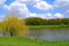 Krajobraz, wierzba przy wodą w wiośnie. zdjęcia royalty free