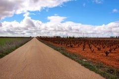 Krajobraz winnicy pod szarym niebem obok drogi w Castilla losie angeles Mancha Obraz Stock