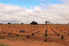 Krajobraz winnicy pod szarym niebem w Castilla losie angeles Mancha Fotografia Royalty Free
