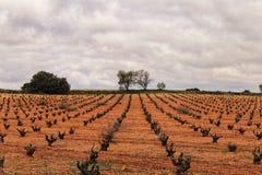 Krajobraz winnicy pod szarym niebem w Castilla losie angeles Mancha Zdjęcie Stock