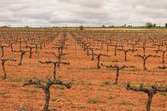 Krajobraz winnicy pod szarym niebem w Castilla losie angeles Mancha Obraz Royalty Free