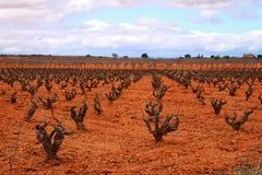 Krajobraz winnicy pod szarym niebem w Castilla losie angeles Mancha Obrazy Stock