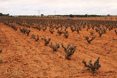 Krajobraz winnicy pod szarym niebem w Castilla losie angeles Mancha Obrazy Royalty Free