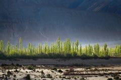 Krajobraz wokoło Nubra doliny w Ladakh, India zdjęcia royalty free