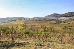 Krajobraz wzgórza dla produkci wino obraz royalty free