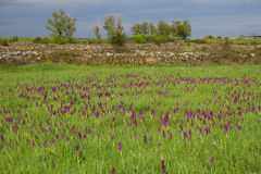 Krajobraz z łąkami i orchideami Zdjęcia Royalty Free