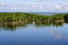Krajobraz z łabędź Zdjęcie Royalty Free