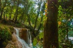 Krajobraz z bajecznie siklawy Agua Azul, Chiapas, Palenque, Meksyk Obraz Royalty Free