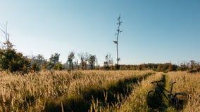 Krajobraz z bicyklem Fotografia Stock