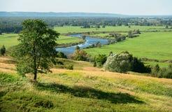 Krajobraz z brzozą Zdjęcia Stock