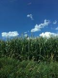 Krajobraz z chmurami Obrazy Stock