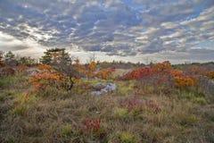 Krajobraz z czerwonym Smoketree Zdjęcia Royalty Free