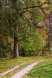 Krajobraz z drogą w lesie Obrazy Royalty Free