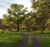 Krajobraz z drogą w lesie Zdjęcie Royalty Free