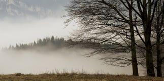 Krajobraz z drzewami i mgła zakrywającym lasem Zdjęcie Royalty Free