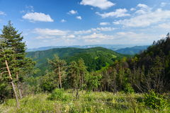 Krajobraz z drzewami, lasem, górami i dolinami od Scarita-Belioara, Obrazy Stock