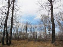 Krajobraz z drzewami na obich stronach i odległym lesie zdjęcia royalty free
