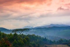 Piękny krajobraz z drzewem i góry w świcie zamglimy Obrazy Royalty Free