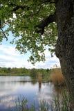 Krajobraz z drzewem i jeziorem Obrazy Stock