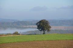 Krajobraz z drzewem i mgłą Zdjęcia Stock