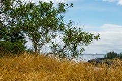 Krajobraz z drzewem na falezie przy oceanu brzeg w letnim dniu Obrazy Royalty Free