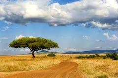 Krajobraz z drzewem w Afryka Fotografia Royalty Free