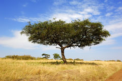 Krajobraz z drzewem w Afryka Zdjęcia Royalty Free