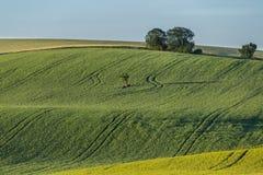 Krajobraz z drzewem w centrum zdjęcie royalty free