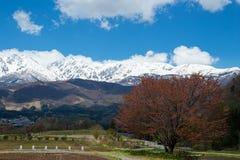 Krajobraz z Hakuba pasmem g?rskim i czere?niowymi okwitni?ciami obrazy stock