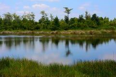 Krajobraz z jeziorem i roślinnością obraz stock