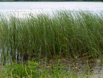 krajobraz z jeziorem w letnim dniu Zdjęcie Royalty Free