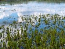 krajobraz z jeziorem w letnim dniu Fotografia Stock